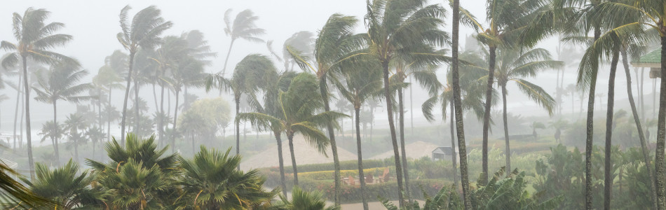 Palm trees being blown around in a storm