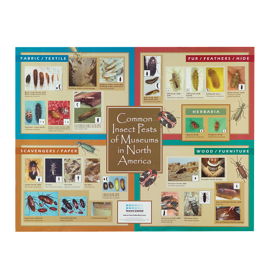 Insect Pests of Museums in North America Identification Poster