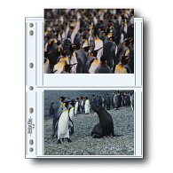 "Print File® 8 mil Polypropylene Album Pages for 5 x 7"" Prints (25-Pack)"