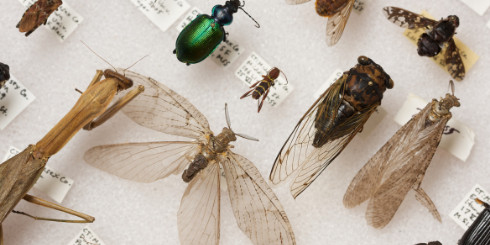 Insect specimens on white background with labels