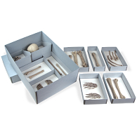Gaylord Archival® Skeletal Remains Storage Kit