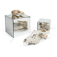 Mirrored Acrylic Display Cube